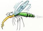 Con muỗi ...
